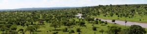 Panorama of Tarangire National Park